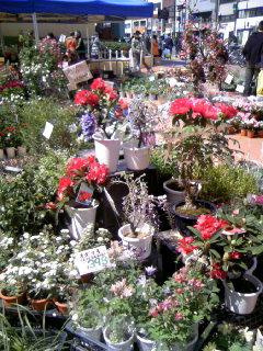 花とハーブ