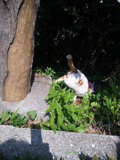 神奈川県動物愛護協会訪問