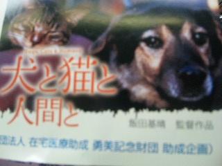 日本の犬には生まれたくない
