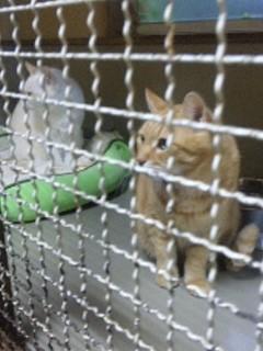神奈川県動物愛護協会訪問②