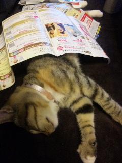 猫日記エレガントなフラフラさん