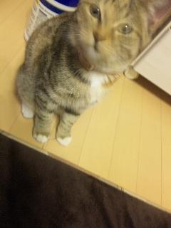 猫日記〜テレビ〜