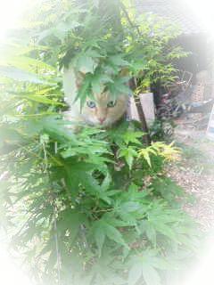 猫だらけO(<br />  ≧∇≦)o