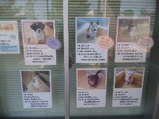 さいたま市動物愛護ふれあいセンター