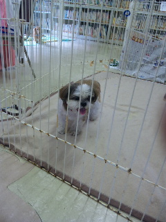 川崎市動物愛護センター訪問レポ。皆さん、どうか是非読んでください!