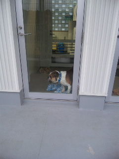 横浜市動物愛護センター訪問