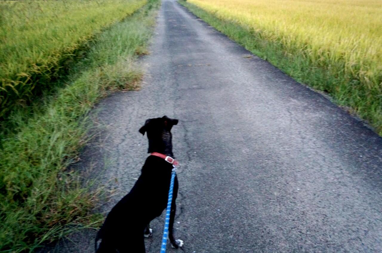 お散歩、秋だなあ…